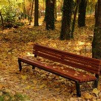 Средь золотой листвы... :: Светлана