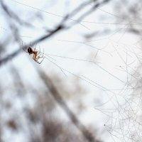 На паутинке с каплями.. :: Юрий Стародубцев
