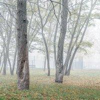 Туман. :: Владимир Ф