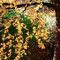 Осень 10 :: Елена Куприянова