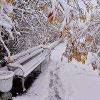 Первый снег... :: Витас Бенета