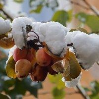 Первый снег :: Ольга И