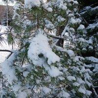 Первый снег :: BoxerMak Mak