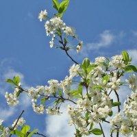 Вспоминая весну,ностальгия :: Лидия (naum.lidiya)