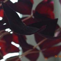 Цветы. :: Anastasiya Kim