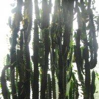 Растение :: Павел Шестаков