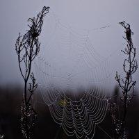 Росинки на паутинке. :: Виктор Евстратов