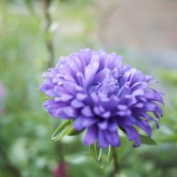 blue flower :: Антон Бабалян