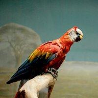 Попугай ара :: Елена Богос