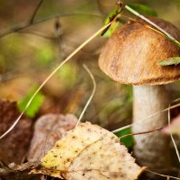 Дары леса :: Yulia Polugaeva
