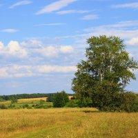 Летний пейзаж :: Александр Щеклеин