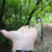 Смелая птичка :: Елена Политик