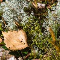 Осень в вологодском лесу :: Борис Устюжанин