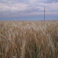 В поле :: Алексей Ворон
