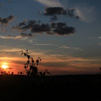 Над деревом солнце еще живо :: Влад Ложкин