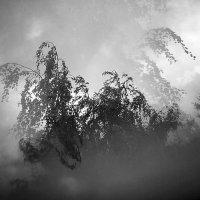 Перед грозой :: Александр Русинов