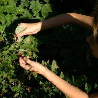 ягодки ищу :: Света Кондрашова