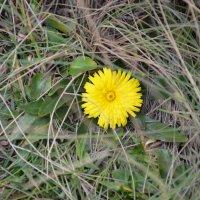 Flower :: Юлия Тимонина