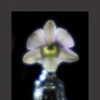 Фонарик, рюмка, орхидея... :: Алексей Пышненко