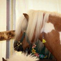Пони тоже кони :: Kirilla Spring