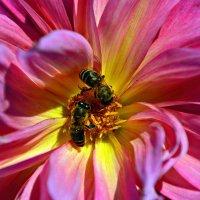 Осенний нектар. :: Олеся