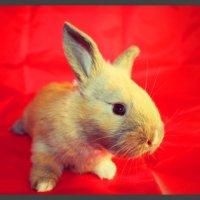 кролик :: Natalya секрет