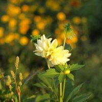 Еще один цветок ) :: Григорий Азатян