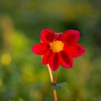 Цветок :: Григорий Азатян