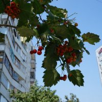 ягода :: Алексей Медведев