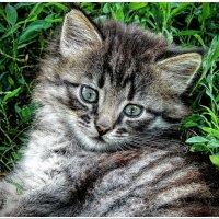 Котёнок :: Евгений Кочуров