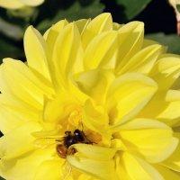 Пчёлка. :: Геннадий Оробей