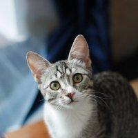 Кошка :: Дарья Соколик