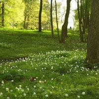 Весна :: Дарья Соколик