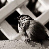 Птица :: Дарья Сумишевская