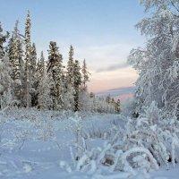 Морозное утро декабря... :: Сергей