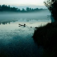 Одинокая утка :: Yulia Braginets