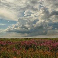 Когда цветёт кипрей :: Олег Сонин