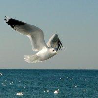 Лебеди прилетели! :: Вадим