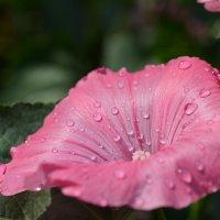 после дождя :: Евгений Плаксин