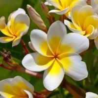цветок :: Alexsei Melnikov