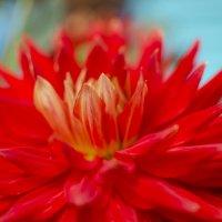 цветы :: Евгений Лавров