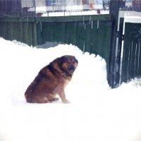 Собака улыбака :: Света Кондрашова