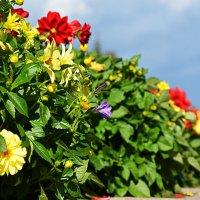 Цветы :: Виктория Устюгова