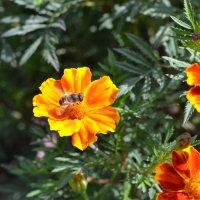 Пчелка :: Мария Лушпенко