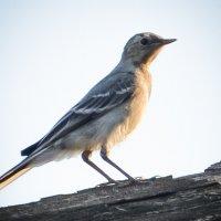 Птичка-невеличка :: Анастасия Норина