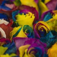Яркие краски розы :: Алексей Соминский