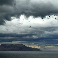 Беспокойство перед бурей :: Геннадий Валеев