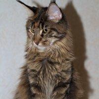 Cat 1 :: Александр Rehc