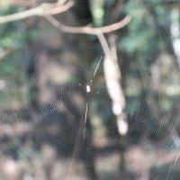 паук :: Igor Fursov