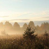 Когда шепчет туман... :: Софья Погорелова